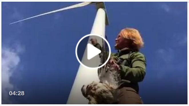 Windkraftanlagen schützen Vögel